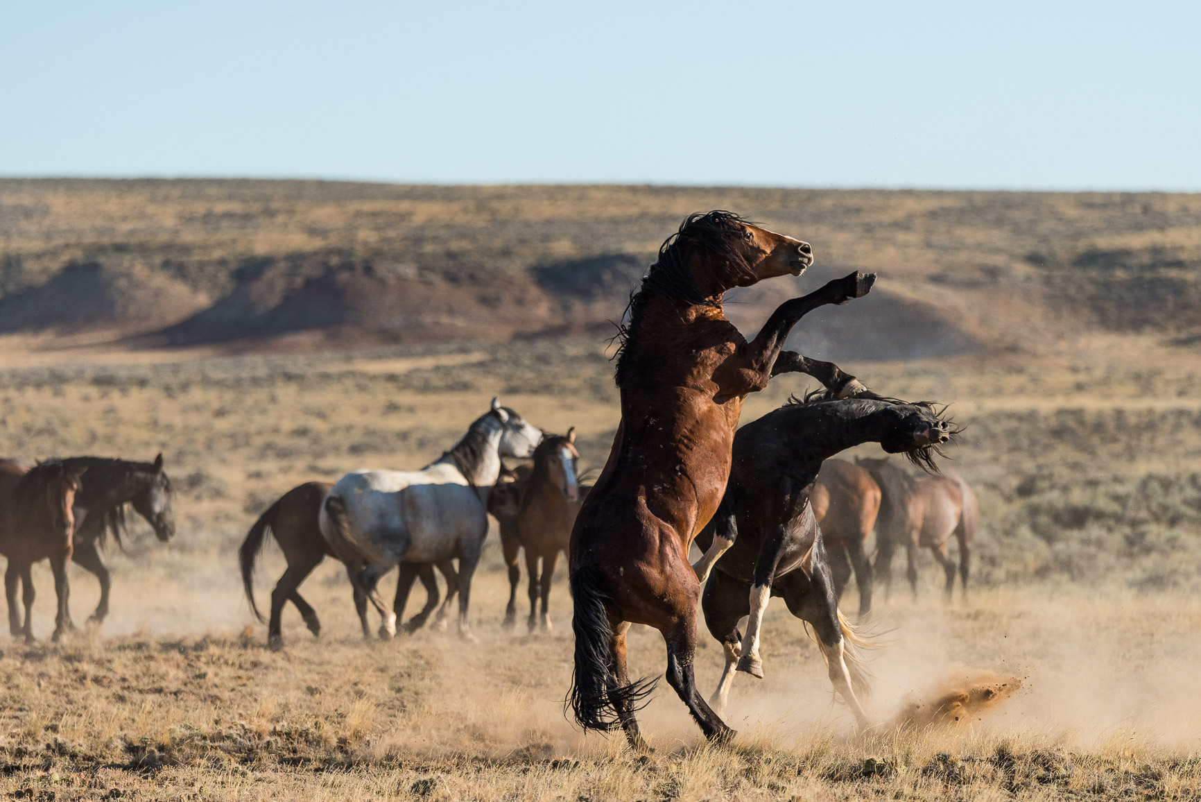 The Wild Horses Of McCullough Peaks